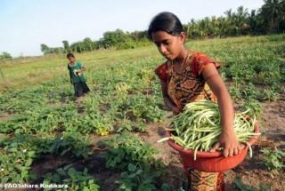 Dimezzare la fame entro il 2015, secondo la FAO si può